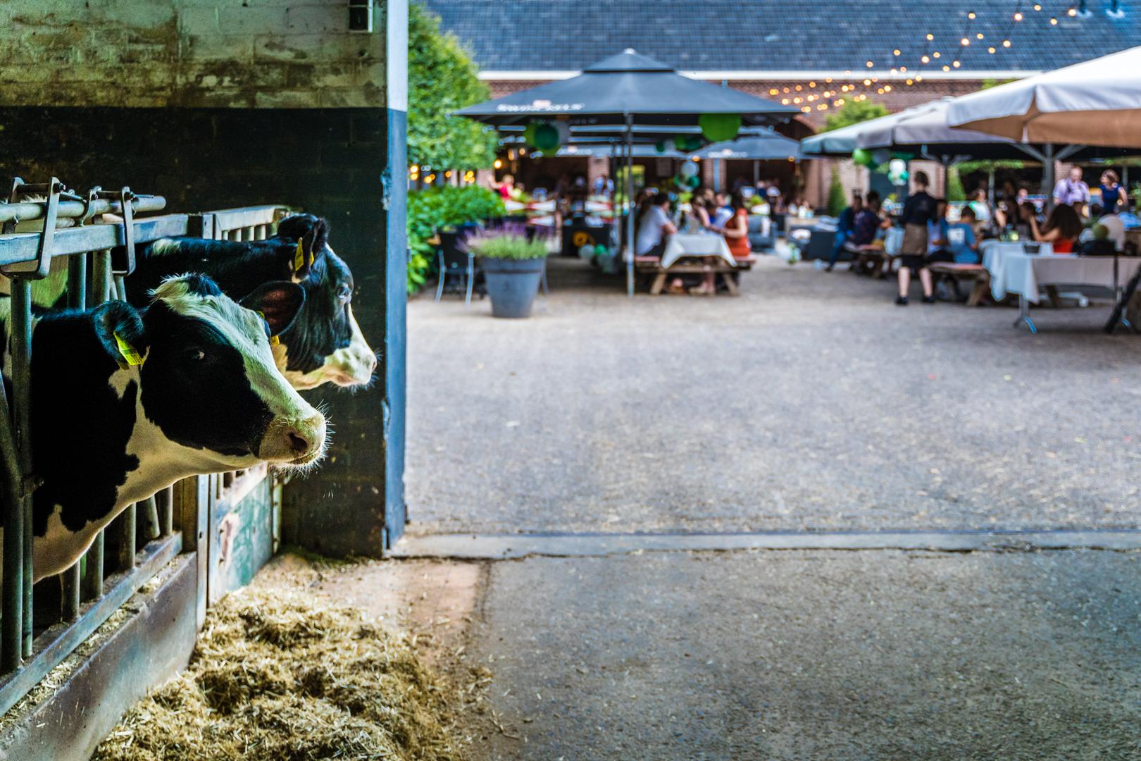 Buitenbruiloft in Brabant